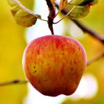 Lets think of an apple - a blog about communication and international strategies for universities